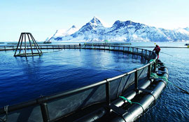Seafood Innovation Cluster